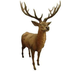 R010 Deer
