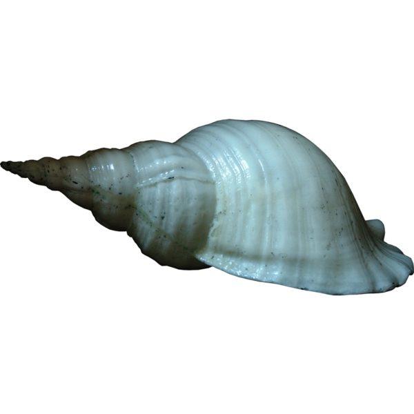 ACP585