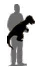 Baby T-Rex (Standing)