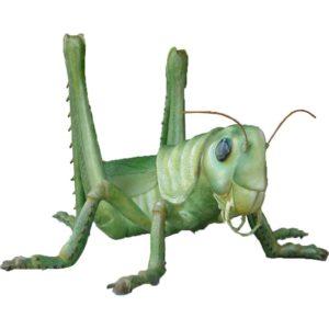 FSC1191 Grasshopper (Resin)