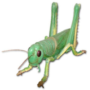 FSC1191 Grasshopper (Rubber)