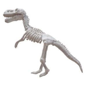 FSC1199 Small Dino Skeleton