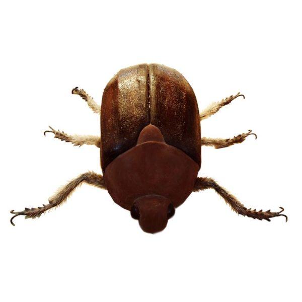 FSC1247 Bug