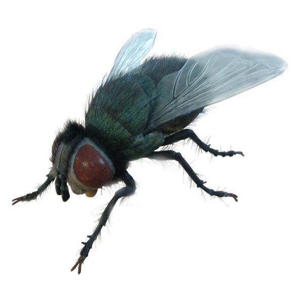 TB_Fly