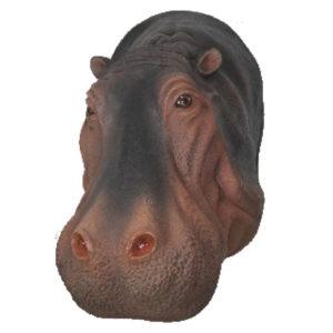 hippo head2