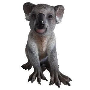 koala_front