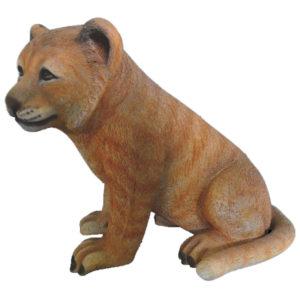 lion-cub-sitting-2