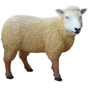 sheep-new